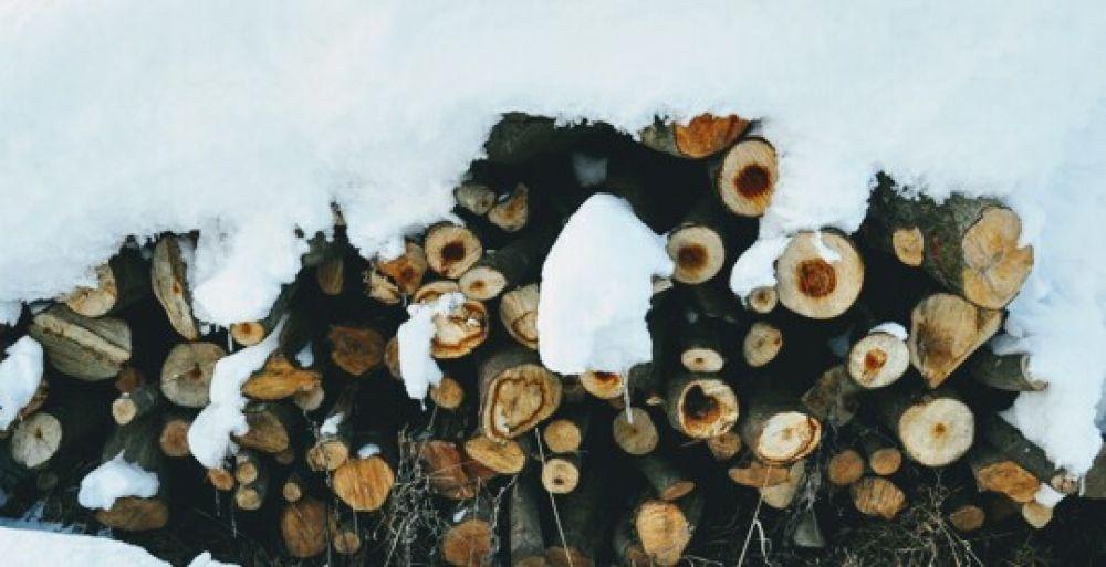 Tropem ciszy – leśny warsztat terenowy